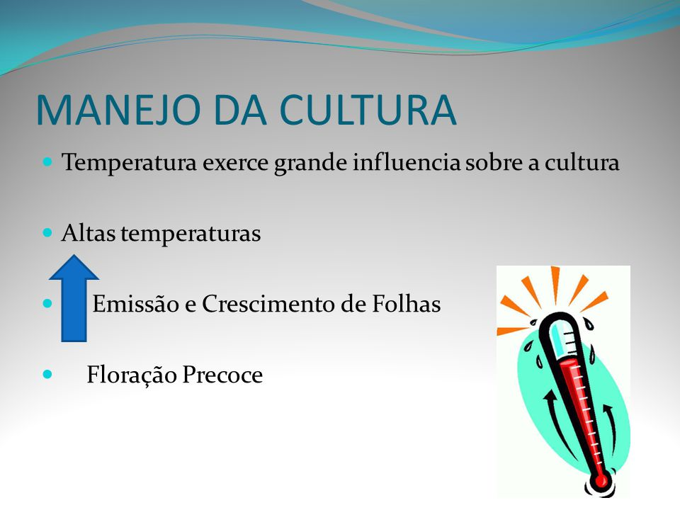 MANEJO DA CULTURA Temperatura exerce grande influencia sobre a cultura