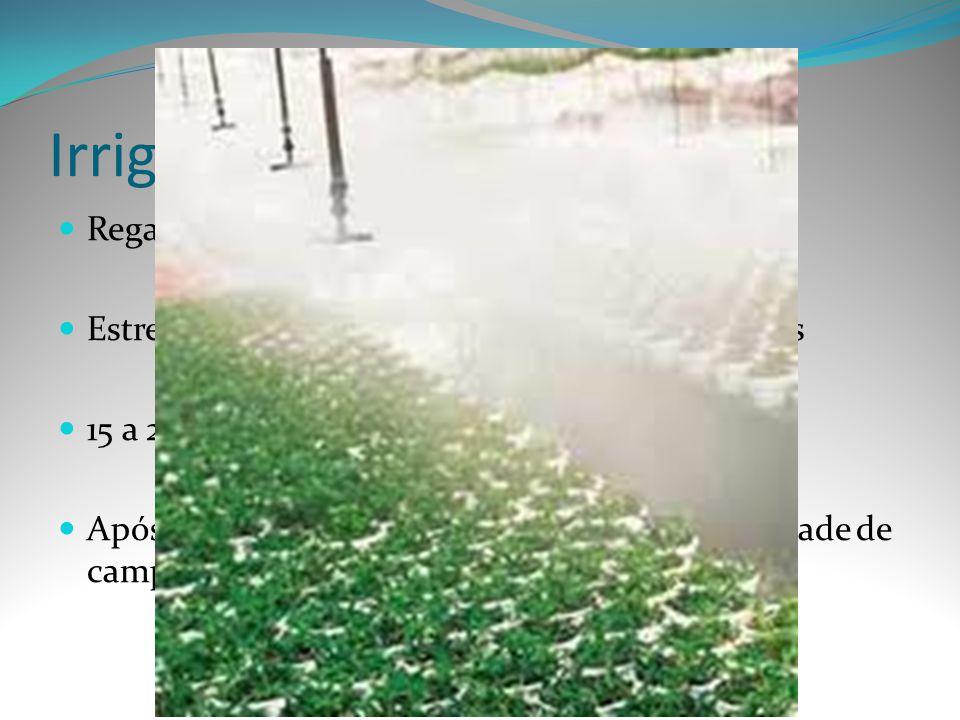 Irrigação Regas diárias sem excessos
