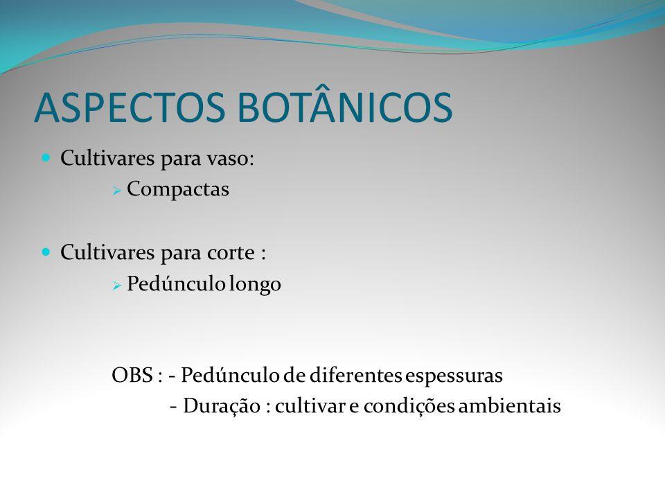ASPECTOS BOTÂNICOS Cultivares para vaso: Cultivares para corte :