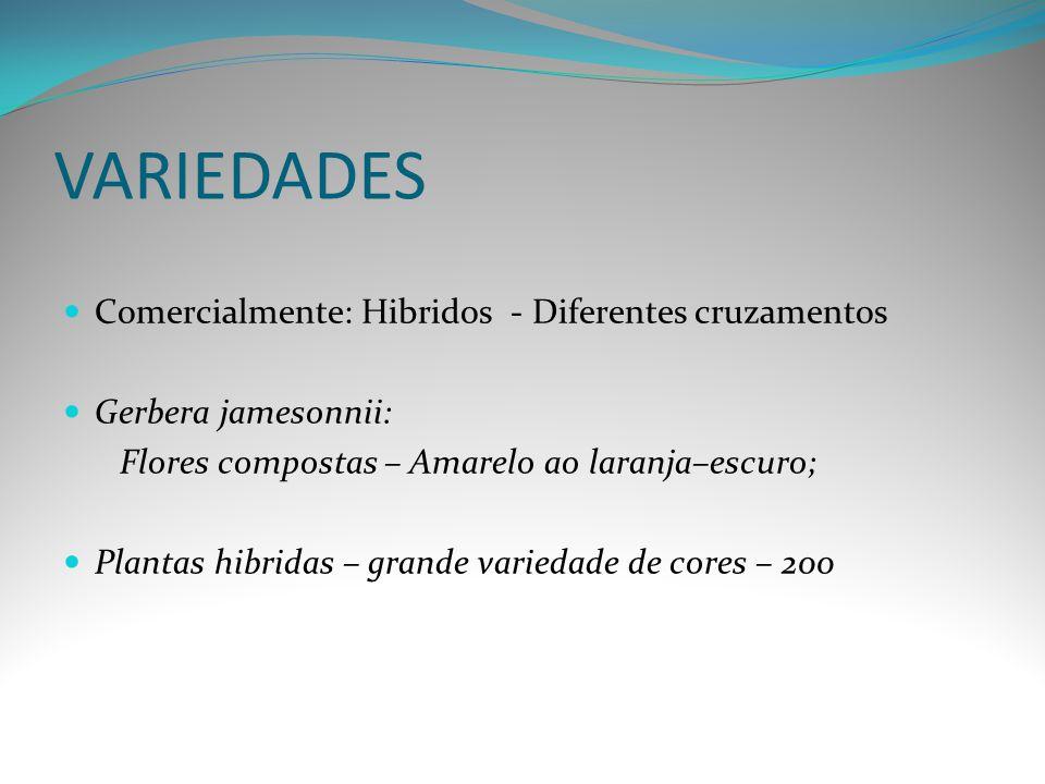 VARIEDADES Comercialmente: Hibridos - Diferentes cruzamentos