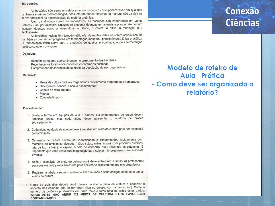- Como deve ser organizado o relatório