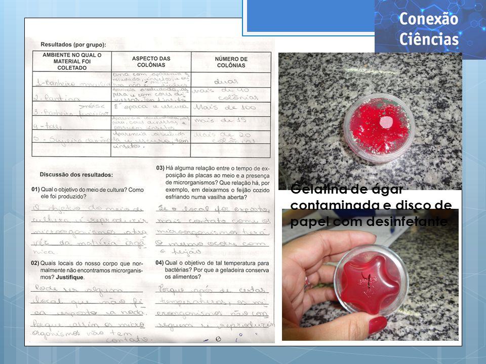 Gelatina de ágar contaminada e disco de papel com desinfetante