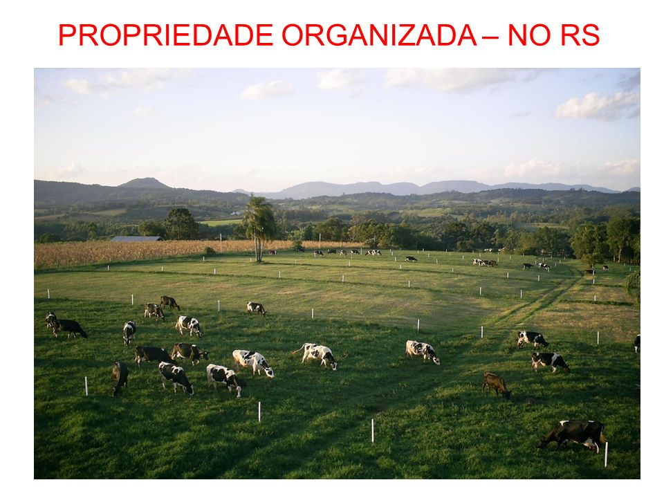 PROPRIEDADE ORGANIZADA – NO RS