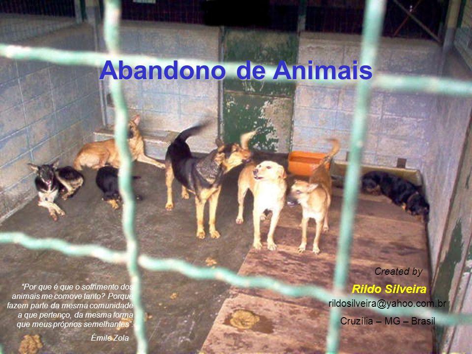 Abandono de Animais Rildo Silveira Created by