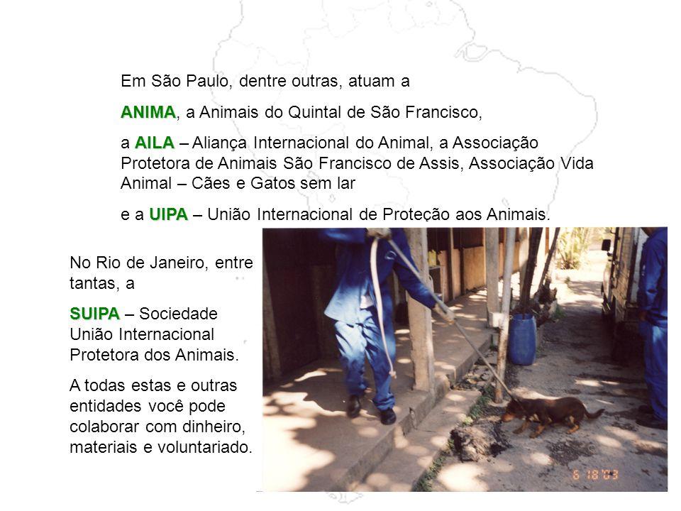 Em São Paulo, dentre outras, atuam a