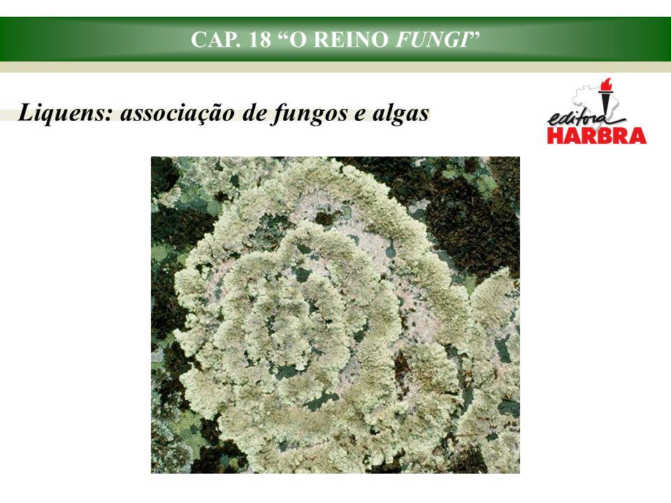 Liquens: associação de fungos e algas