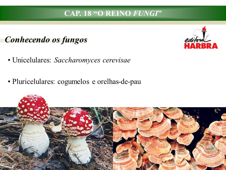 Conhecendo os fungos CAP. 18 O REINO FUNGI