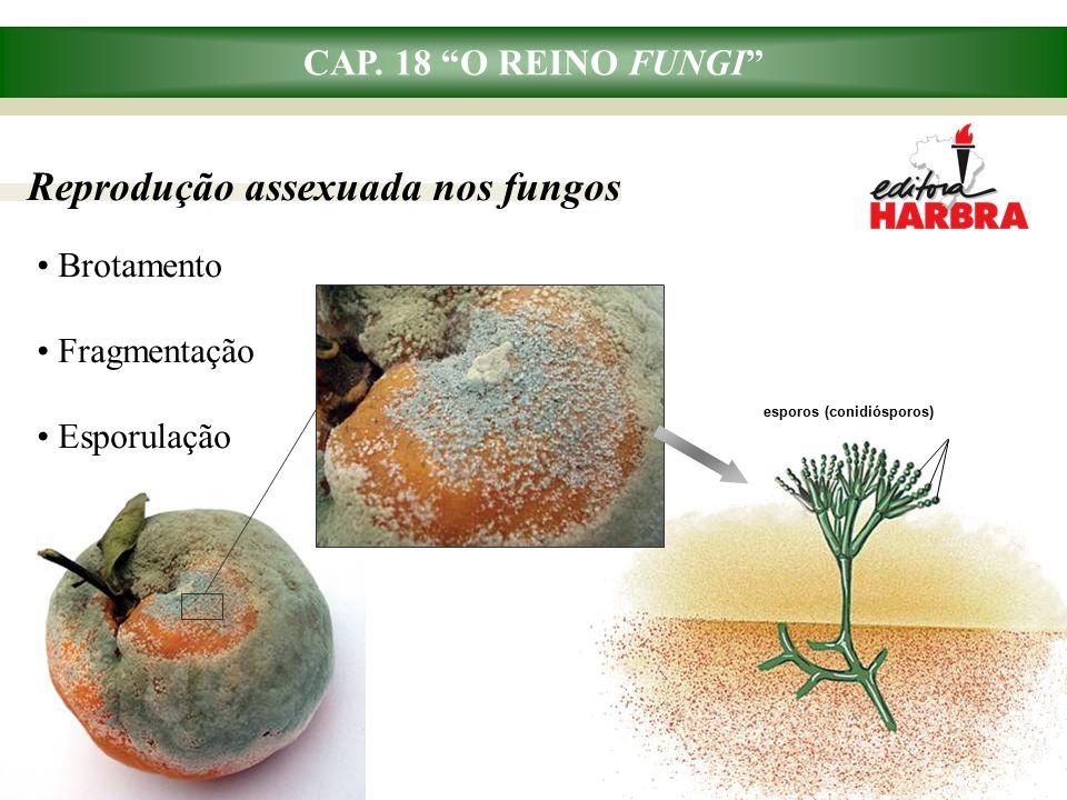 Reprodução assexuada nos fungos