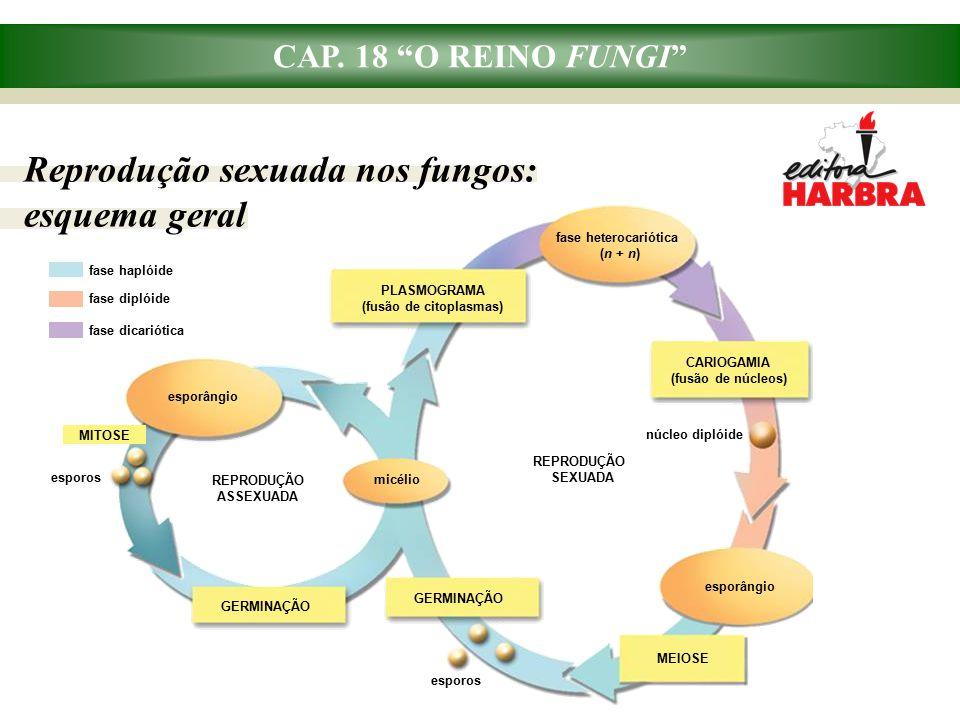 Reprodução sexuada nos fungos: esquema geral
