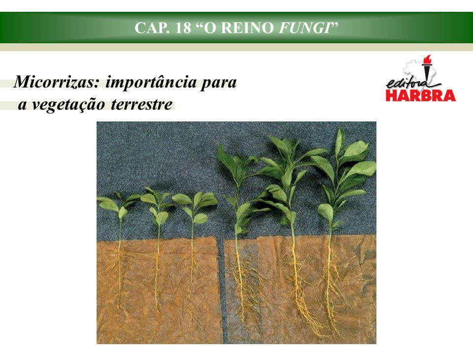 Micorrizas: importância para a vegetação terrestre