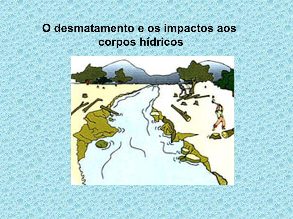 O desmatamento e os impactos aos