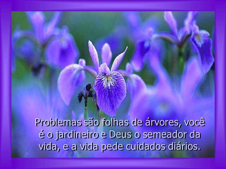 Problemas são folhas de árvores, você é o jardineiro e Deus o semeador da vida, e a vida pede cuidados diários.