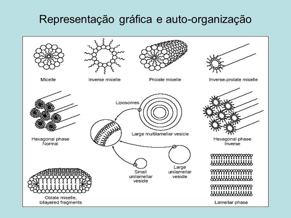 Representação gráfica e auto-organização
