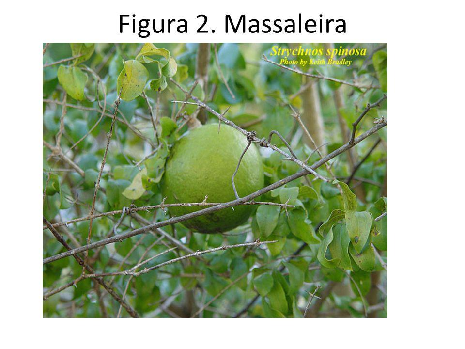 Figura 2. Massaleira