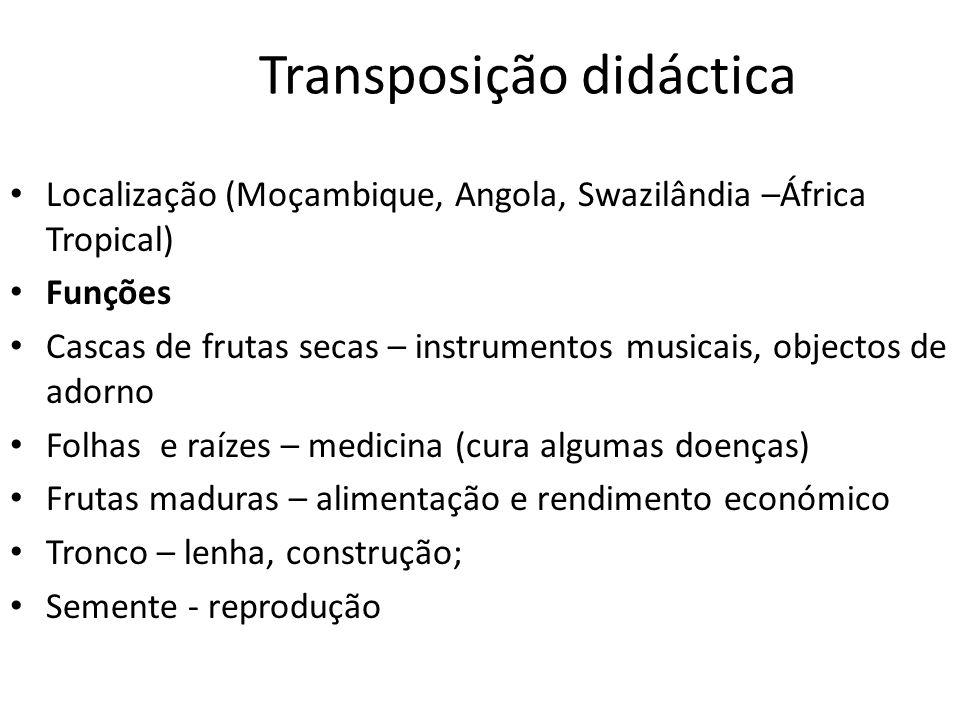Transposição didáctica