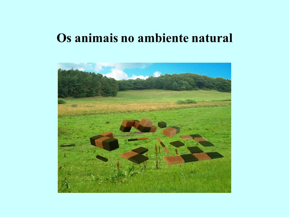 Os animais no ambiente natural