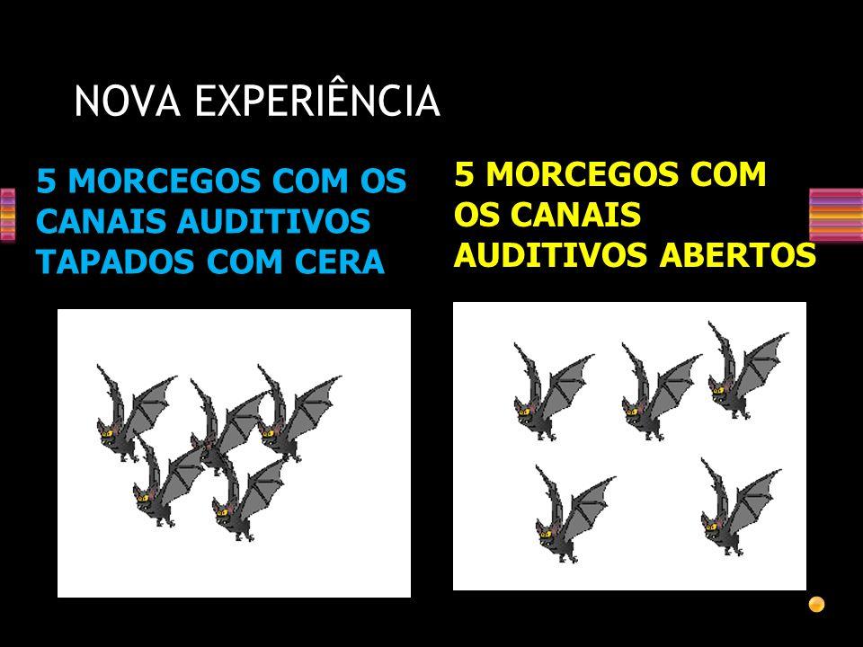 NOVA EXPERIÊNCIA 5 MORCEGOS COM OS CANAIS AUDITIVOS ABERTOS
