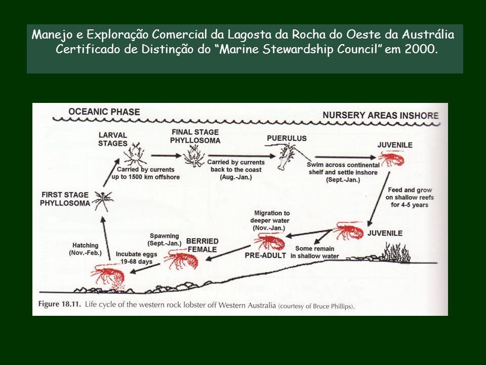 Manejo e Exploração Comercial da Lagosta da Rocha do Oeste da Austrália