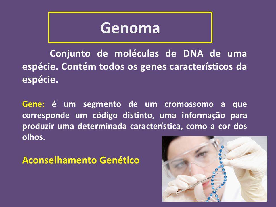 Genoma Conjunto de moléculas de DNA de uma espécie. Contém todos os genes característicos da espécie.