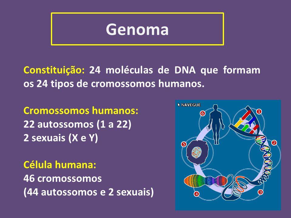 Genoma Constituição: 24 moléculas de DNA que formam os 24 tipos de cromossomos humanos. Cromossomos humanos:
