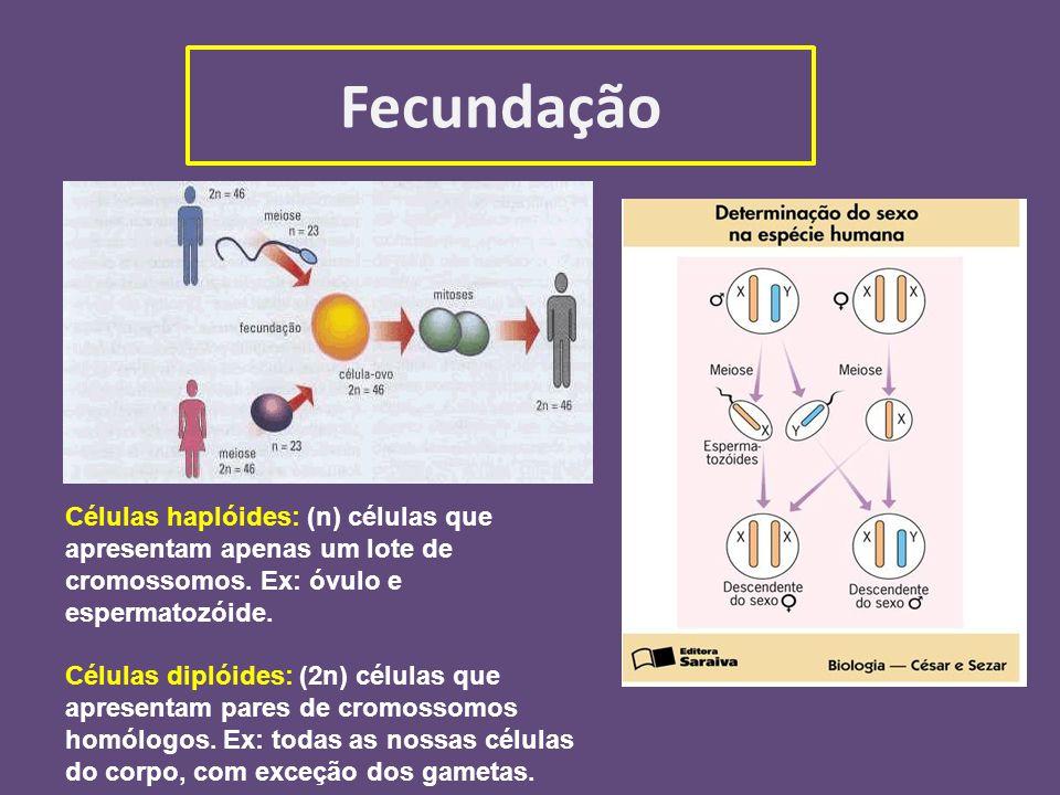 Fecundação Células haplóides: (n) células que apresentam apenas um lote de cromossomos. Ex: óvulo e espermatozóide.
