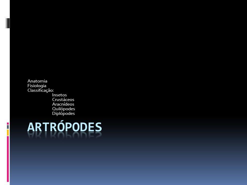 Artrópodes Anatomia Fisiologia Classificação: Insetos Crustáceos