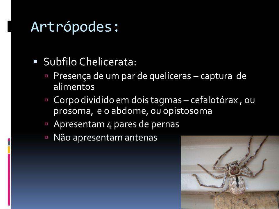 Artrópodes: Subfilo Chelicerata: