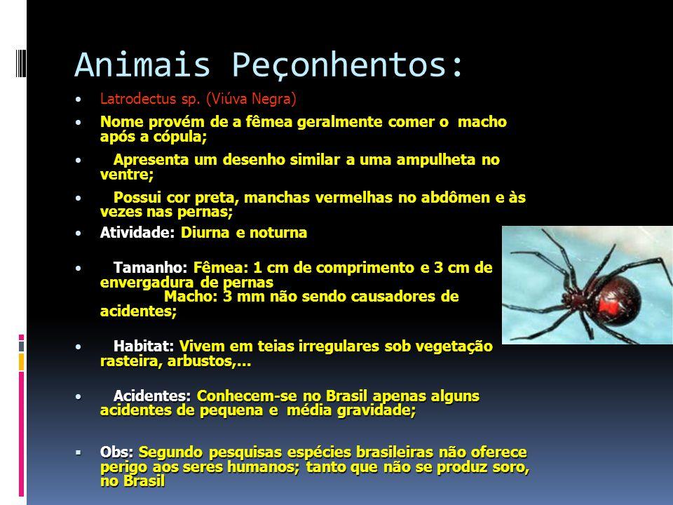 Animais Peçonhentos: Latrodectus sp. (Viúva Negra)