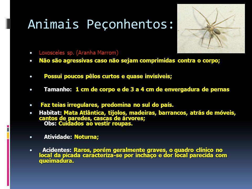 Animais Peçonhentos: Loxosceles sp. (Aranha Marrom)
