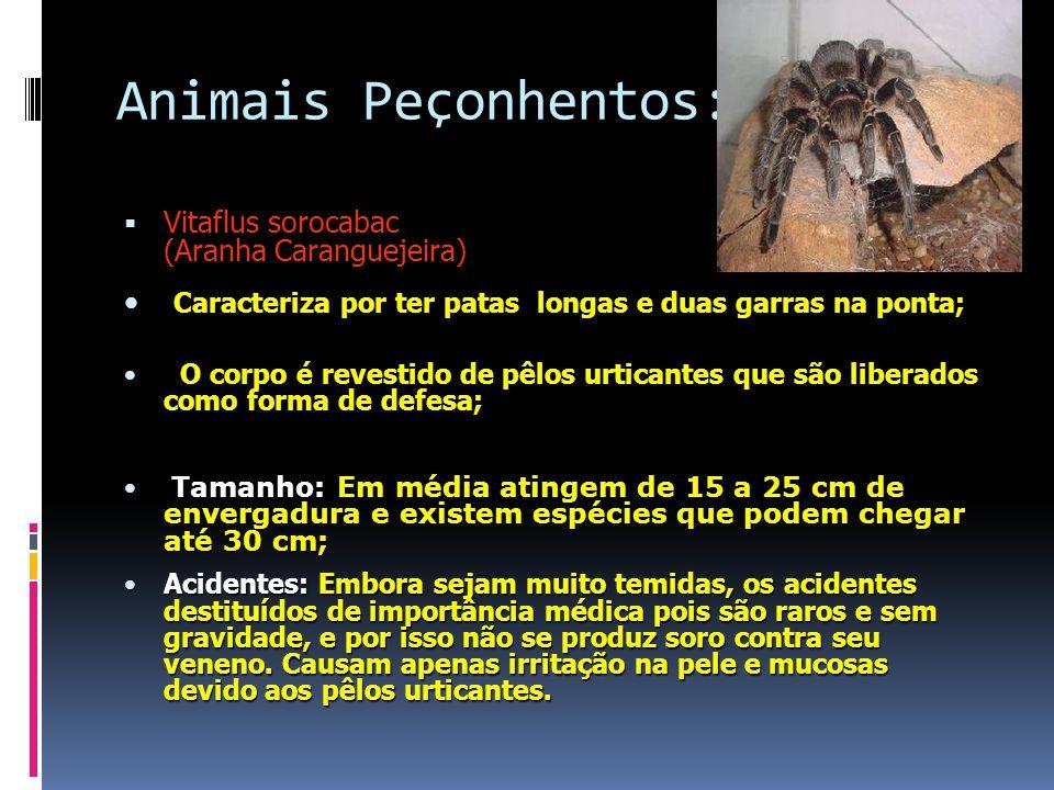 Animais Peçonhentos: Vitaflus sorocabac (Aranha Caranguejeira) Caracteriza por ter patas longas e duas garras na ponta;
