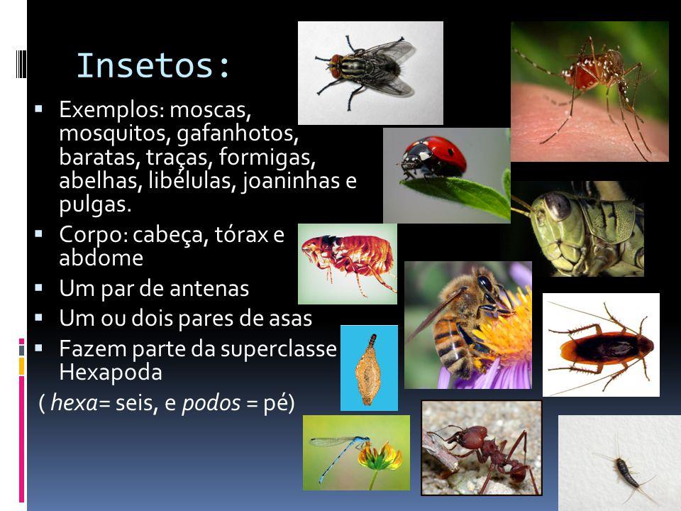 Insetos: Exemplos: moscas, mosquitos, gafanhotos, baratas, traças, formigas, abelhas, libélulas, joaninhas e pulgas.