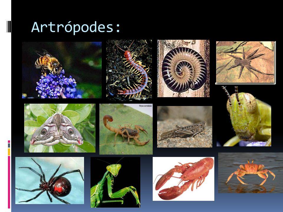 Artrópodes: