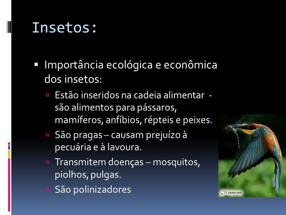 Insetos: Importância ecológica e econômica dos insetos: