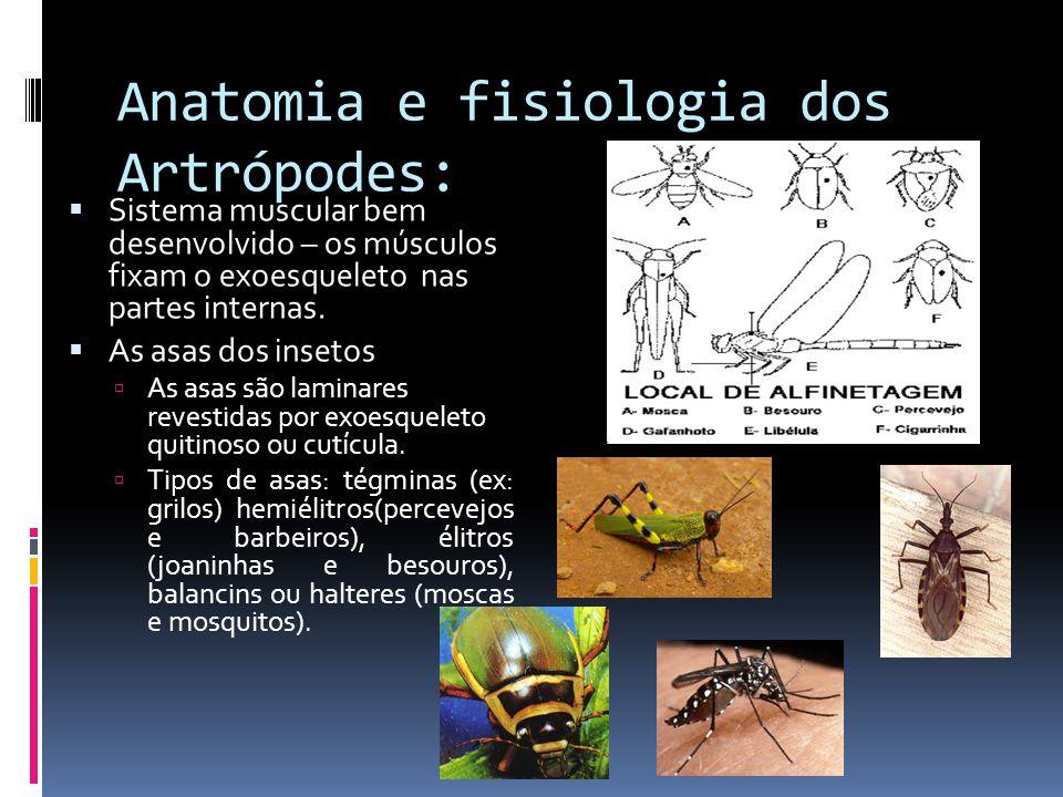 Anatomia e fisiologia dos Artrópodes: