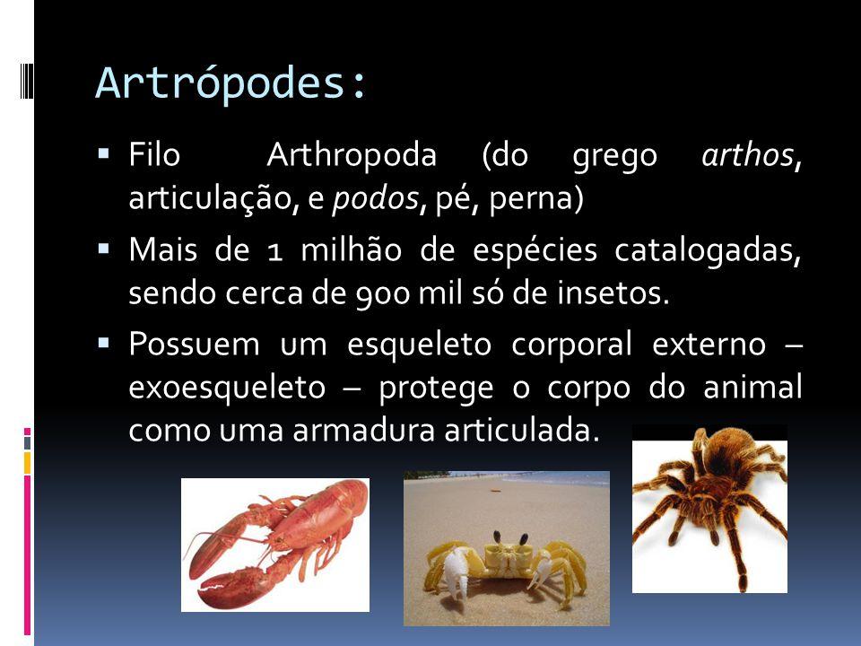 Artrópodes: Filo Arthropoda (do grego arthos, articulação, e podos, pé, perna)