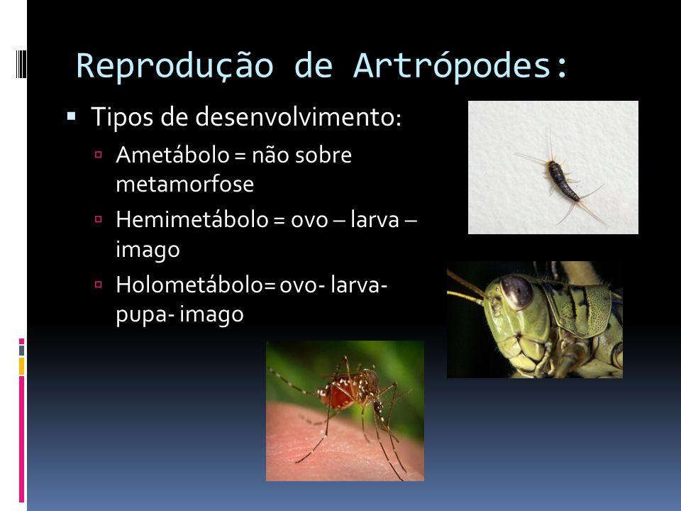 Reprodução de Artrópodes: