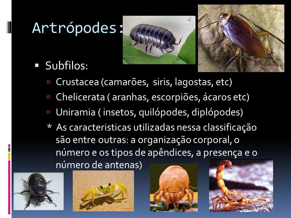 Artrópodes: Subfilos: Crustacea (camarões, siris, lagostas, etc)