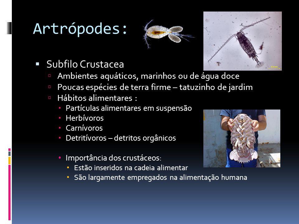Artrópodes: Subfilo Crustacea