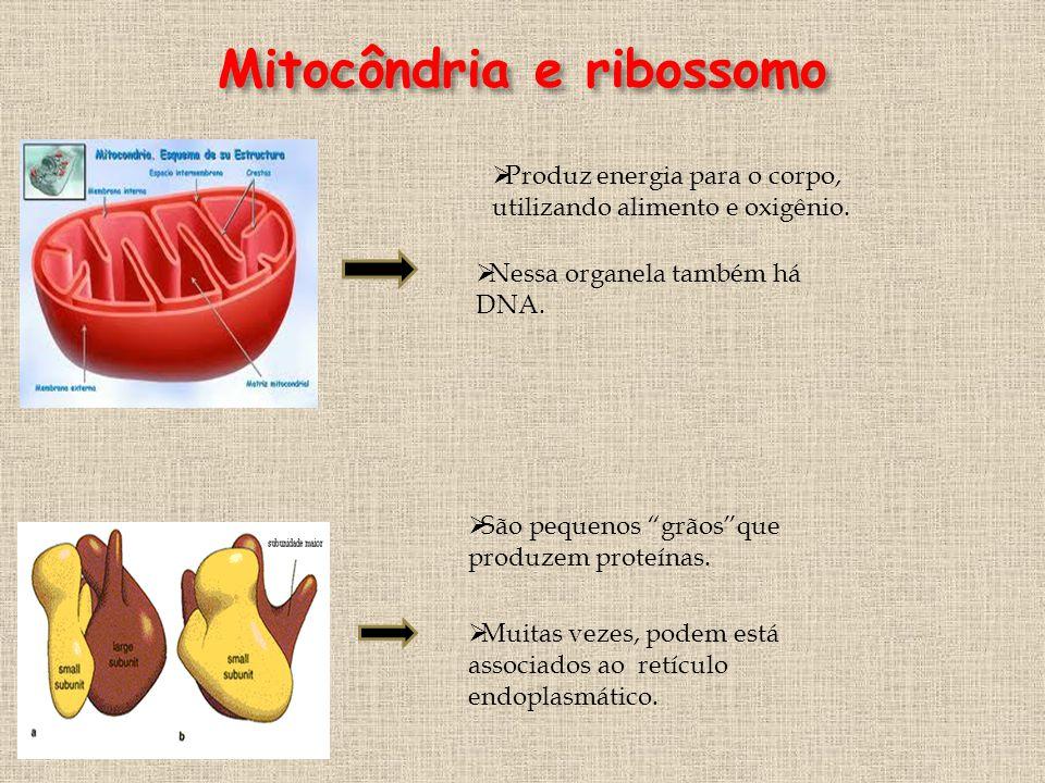 Mitocôndria e ribossomo
