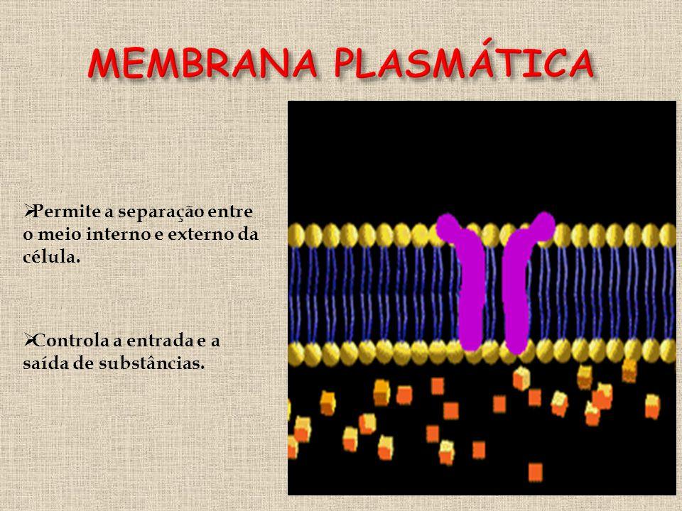 MEMBRANA PLASMÁTICA Permite a separação entre o meio interno e externo da célula.