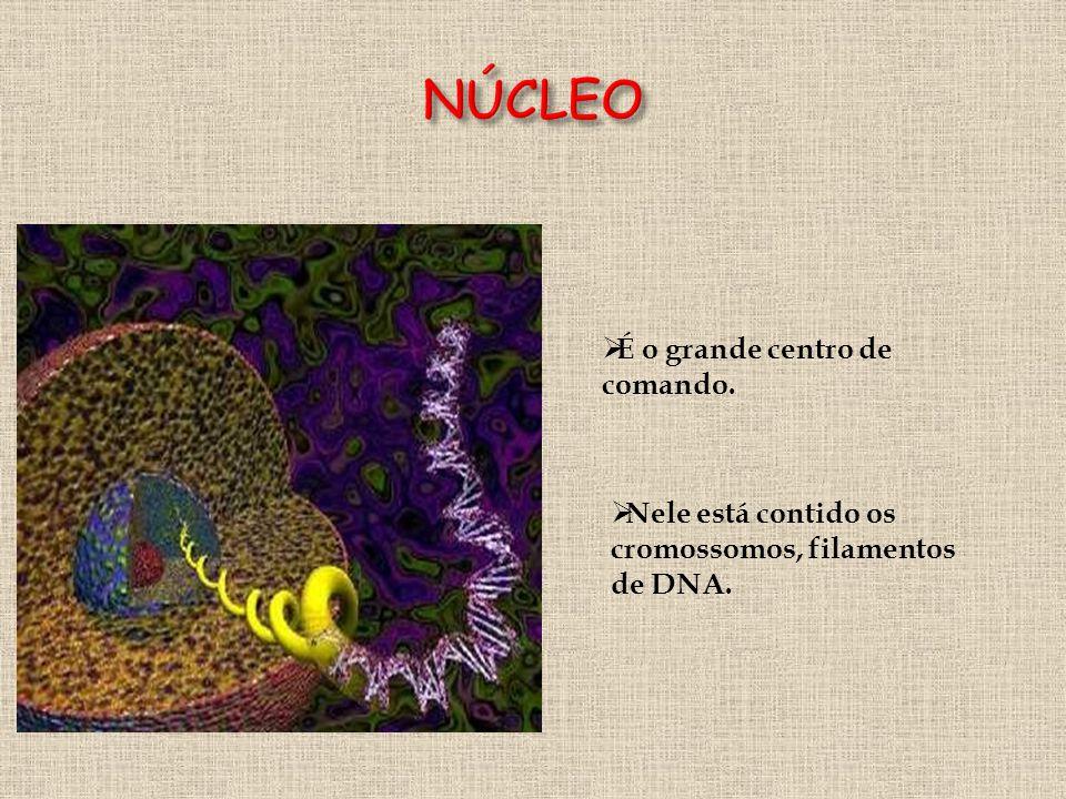 NÚCLEO É o grande centro de comando.