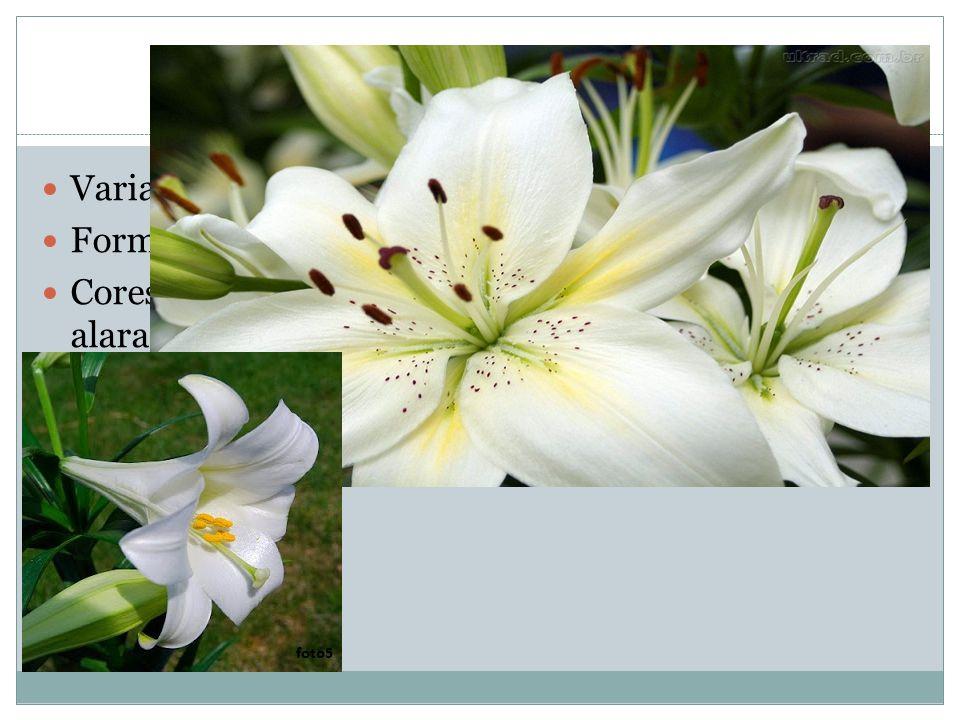 Flores Variação: cor, tamanho e forma Formato: plano ou trompete