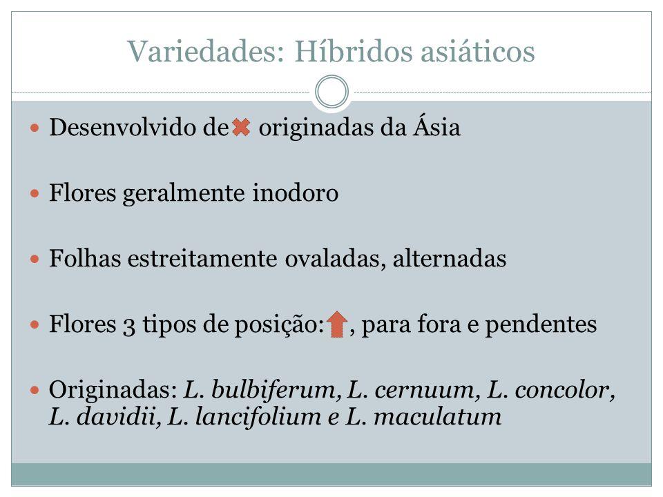 Variedades: Híbridos asiáticos