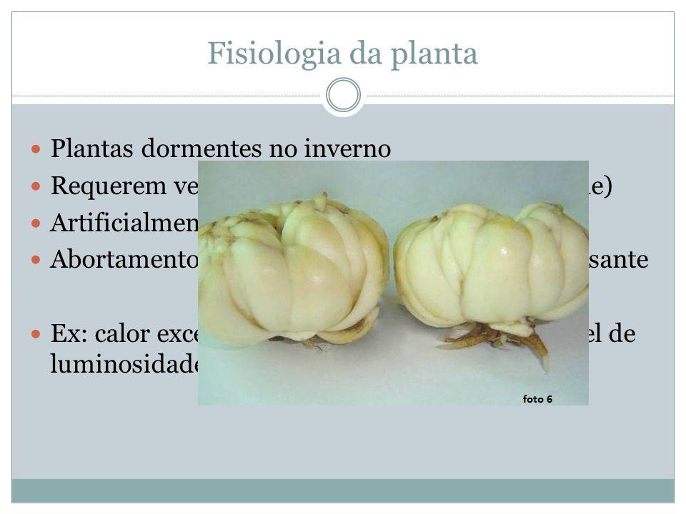 Fisiologia da planta Plantas dormentes no inverno