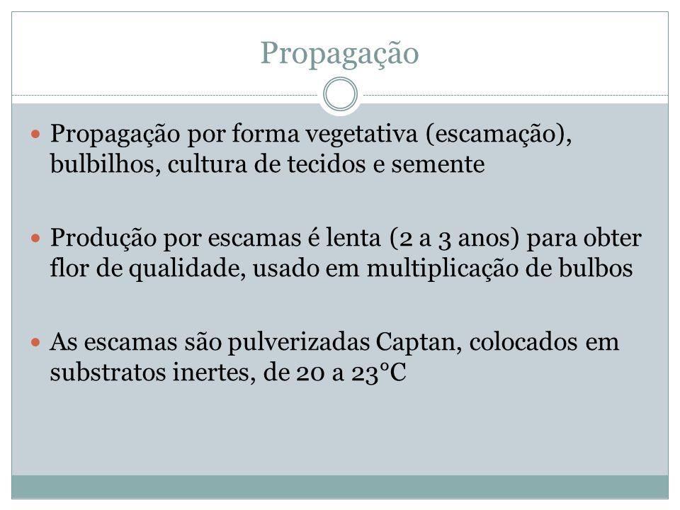 Propagação Propagação por forma vegetativa (escamação), bulbilhos, cultura de tecidos e semente.