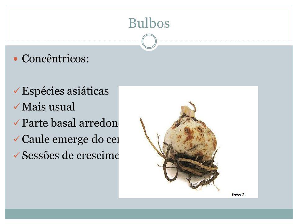 Bulbos Concêntricos: Espécies asiáticas Mais usual