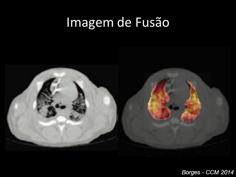 Imagem de Fusão Borges - CCM 2014