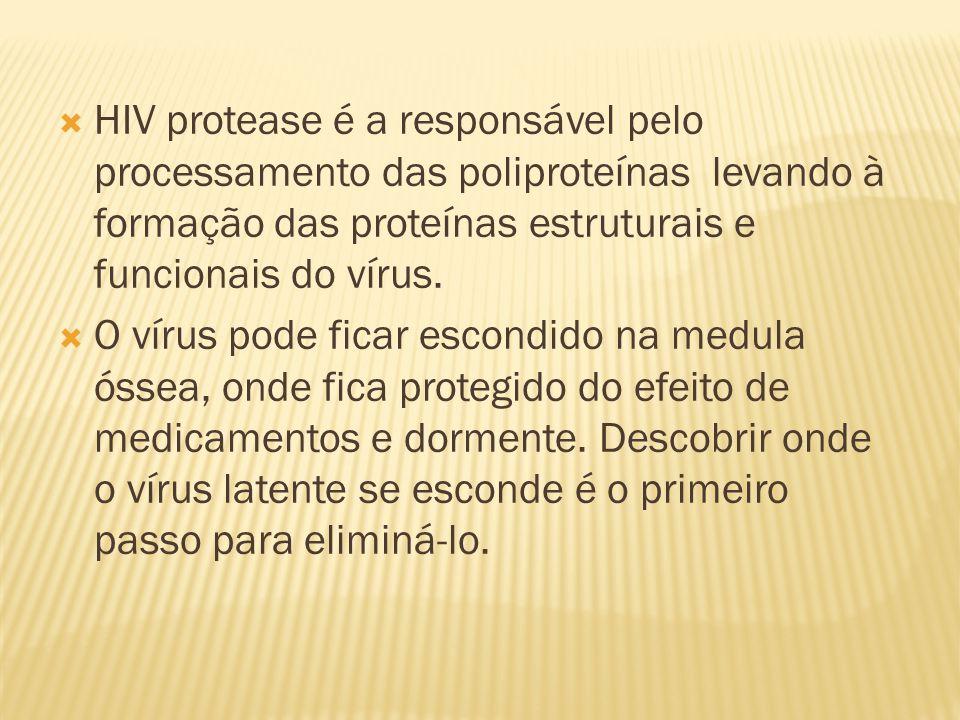 HIV protease é a responsável pelo processamento das poliproteínas levando à formação das proteínas estruturais e funcionais do vírus.