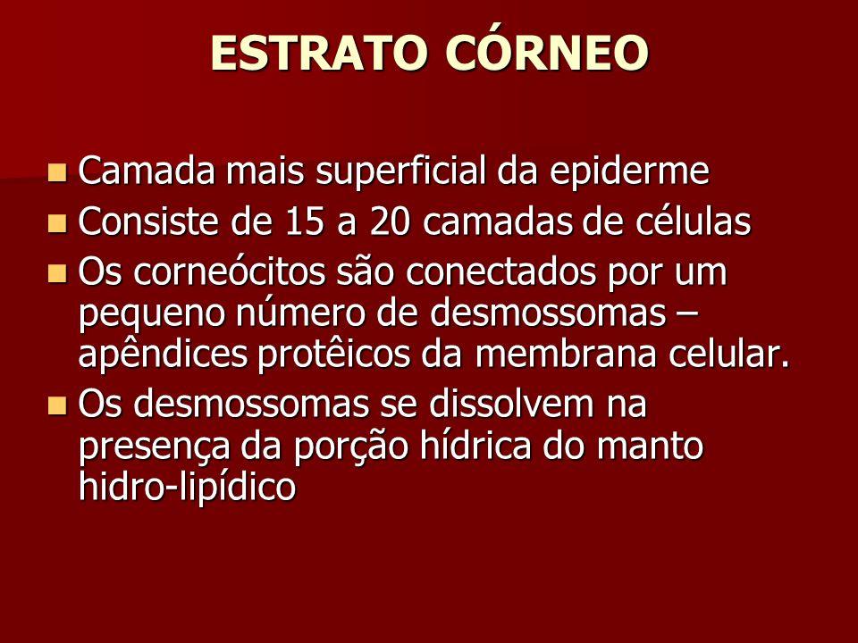 ESTRATO CÓRNEO Camada mais superficial da epiderme