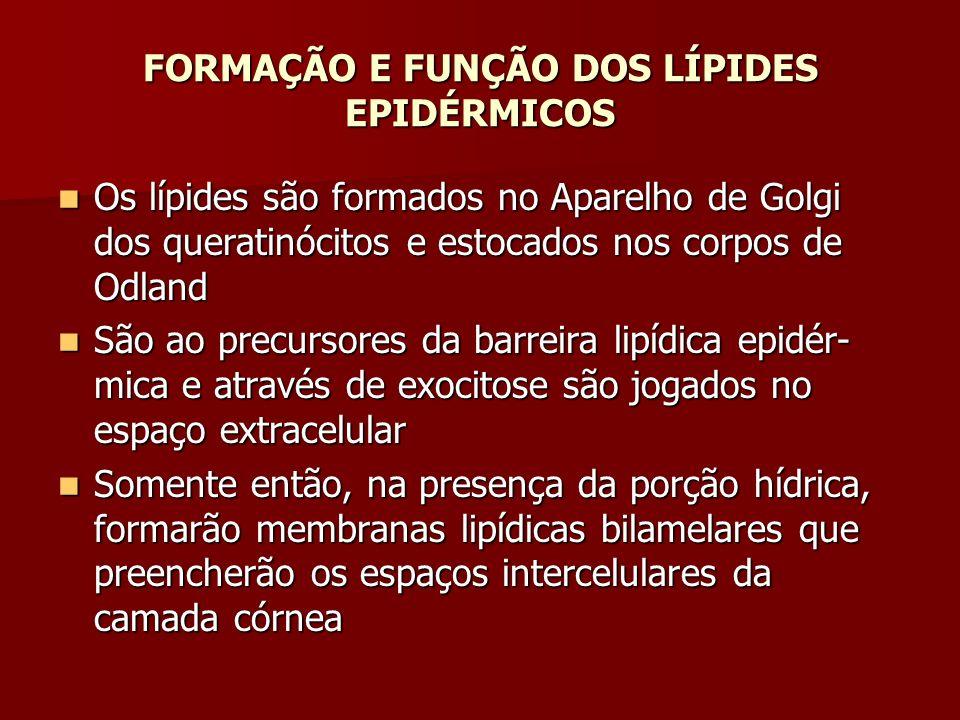 FORMAÇÃO E FUNÇÃO DOS LÍPIDES EPIDÉRMICOS
